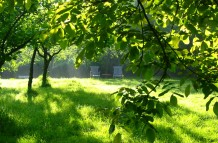 Relaxen in de boomgaard